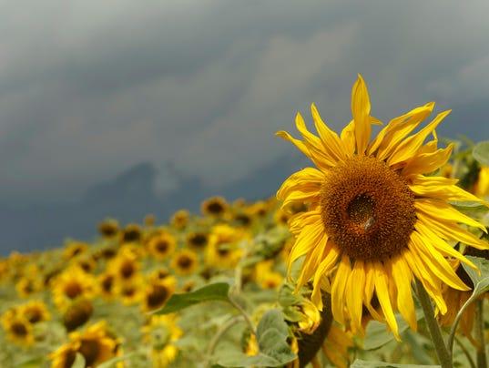 Switzerland Weather_Hill