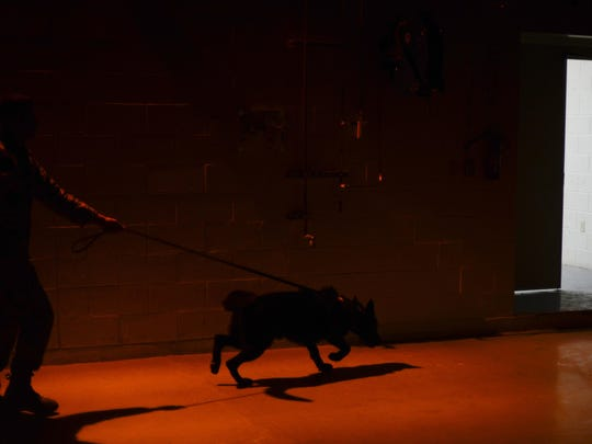A handler and dog team, with the 49th Security Forces Squadron, search a building during a patrol simulation at Holloman Air Force Base Dec. 7. Holloman's MWDs are trained in basic obedience and aggression, and regularly engage in patrol simulations, where they practice explosive and narcotics detection.
