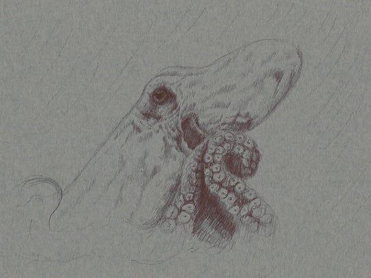 Amanda Coates has based many of her sea creature drawings