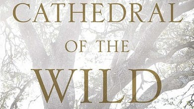 """""""Cathedral of the Wild"""" by Boyd Varty."""