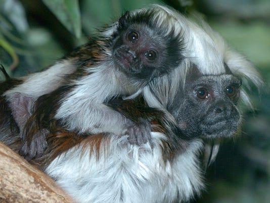 Binder Park Zoo 2007 Season Begins