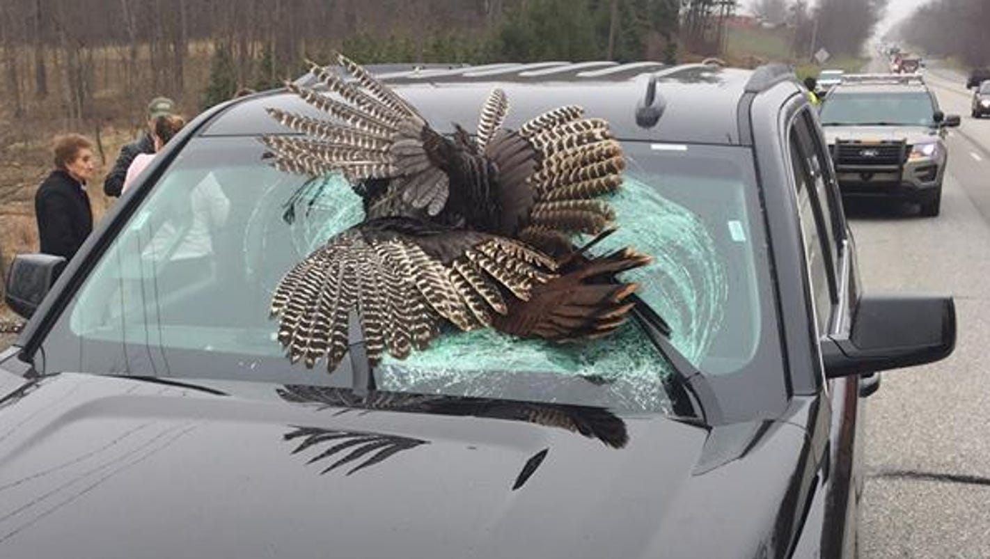 30 pound turkey impales family 39 s windshield in laporte county for Jobs in laporte co