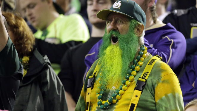 An Oregon fan with his beard dyed green and yellow cheers in the first half of an NCAA college football game against Washington, Saturday, Oct. 17, 2015, in Seattle. (AP Photo/Ted S. Warren)