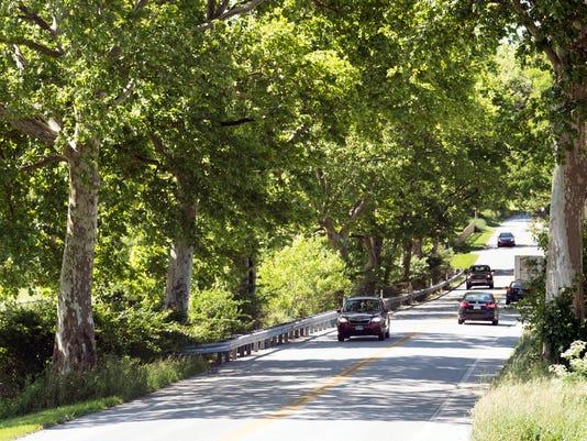 1-YDR-pmk-061218-trees