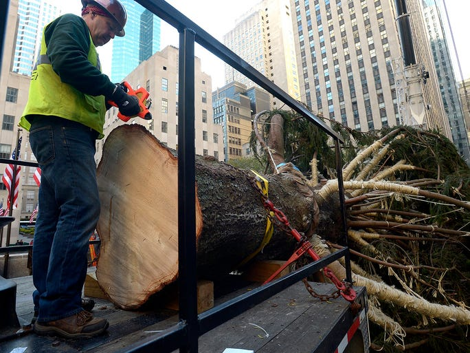 A worker prepares to lift the Rockefeller Center Christmas tree on Nov. 8 at Rockefeller Center in New York City. The 76 foot-tall tree will be decorated then lit during an official ceremony later this month.