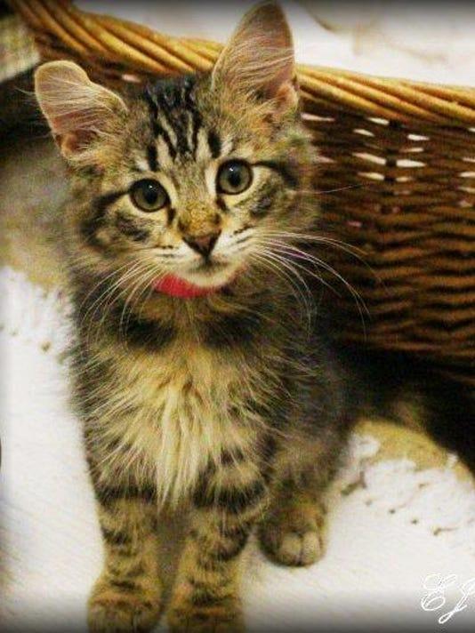 Kittens (5)