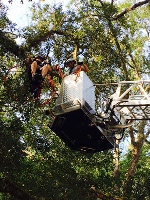 Tallahassee and Jefferson County fire crews work together to rescue a man who crashed his powered parachute into an oak tree Saturday.