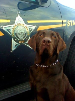 Hemi, a chocolate lab, retired on Sept. 1 after a decade with Oregon State Police.