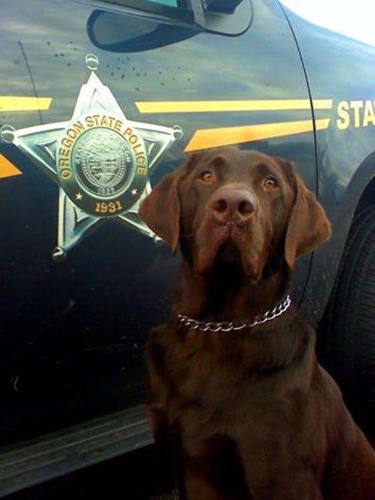 OSP drug canine