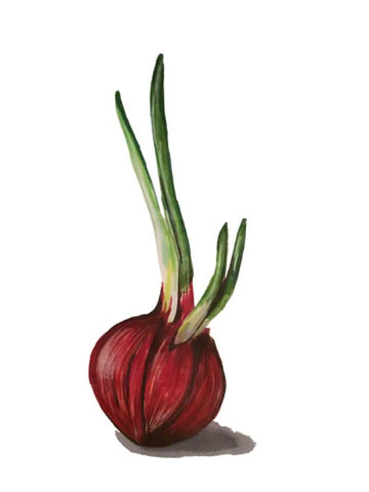 636201678702049002-onion.jpg