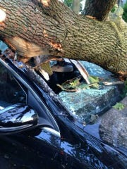 A hole is visible in the windshield of one of the cars under the toppled tree.