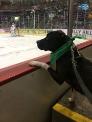 Christopher watches an Elmira Jackals game.