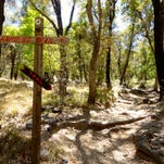 The Hamburg Trail climbs out of Ramsey Canyon and enters the Coronado National Forest where it links with a network of Huachuca Mountain trails.