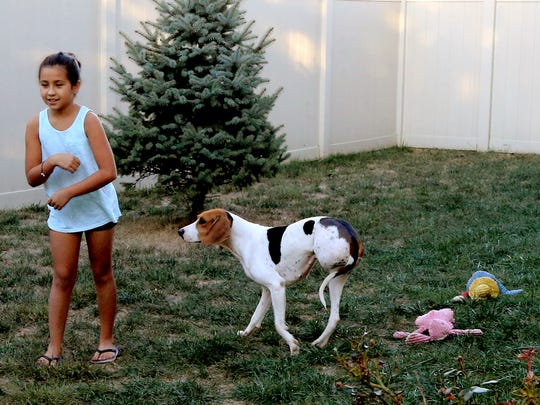 Hope, an injured coonhound that had to have one of her back legs amputated, plays in caregiver Lorie Clairmont's backyard.