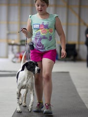 Jillian Plummer, 10, of Stevens Point walks with her dog Viper, an English pointer, during a training session Wednesday for the Portage County 4-H Dog Project at the Amherst Fairgrounds.