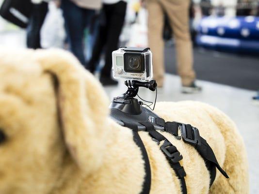 GoPro-fetch