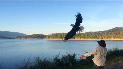 TWRA releases a rehabilitated Eagle last year.