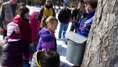 Maple tours will take place all through March at Maybury Farms in Northville.