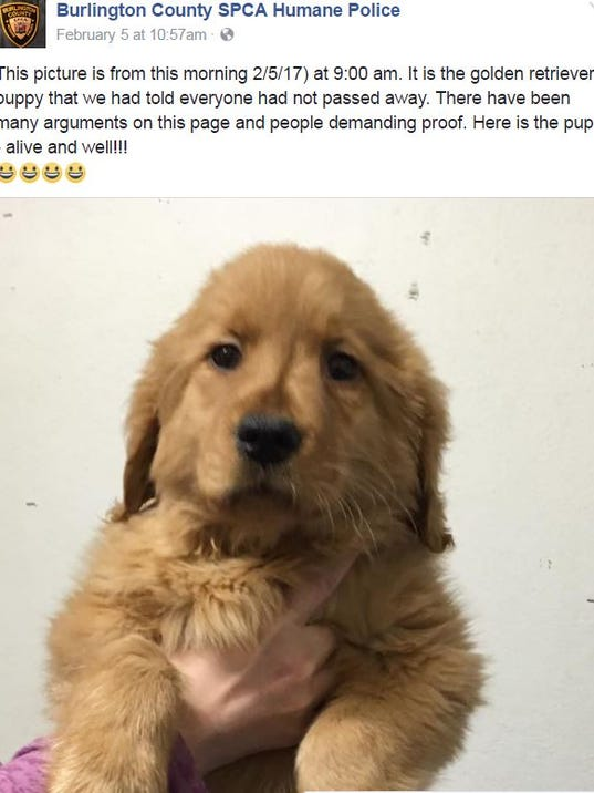 636222559934469702-Puppy-Barn-1.JPG