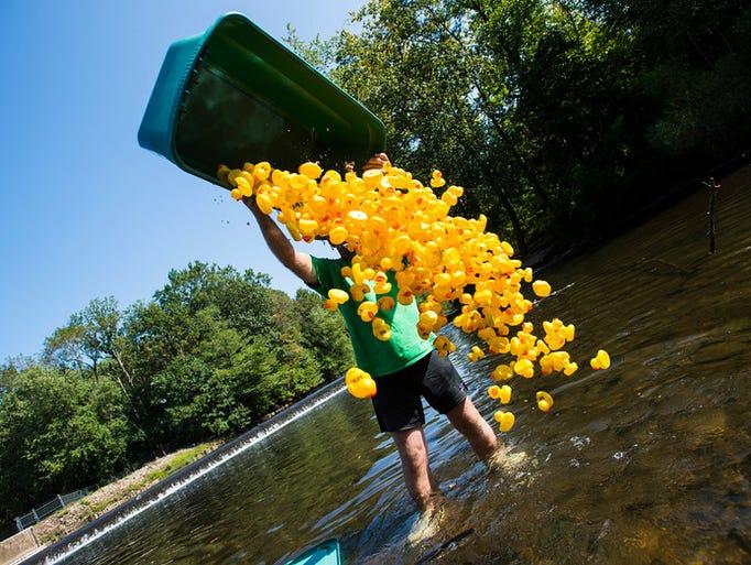 """Jason Kern dumps the rubber ducks in the Swatara Creek"