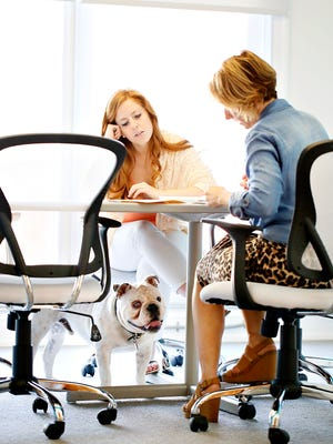 Duff, a 1-year-old old English bulldog, wanders through the conference room  at Gavin Advertising as his owner and Gavin President Mandy Arnold, right, and Ashley Mentzer prepare for a meeting at the agency on West Market Street in York City, Wednesday, June 22, 2016. Dawn J. Sagert photo