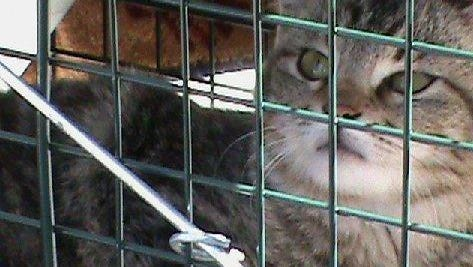 File photo: Cat in cage