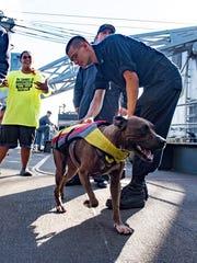A sailor greets Zeus the dog with his owner Tasha Fuiaba,