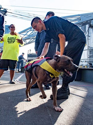A sailor greets Zeus the dog with his owner Tasha Fuiaba, left.