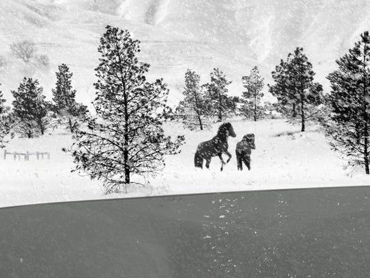 "Abbas Kiarostami's ""24 Frames"" will be shown at Cornell"