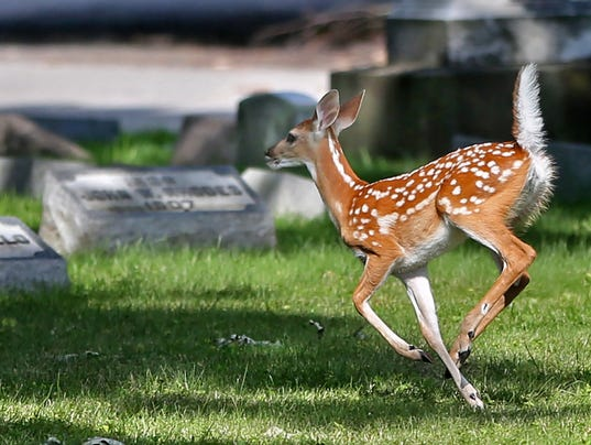 Deer hunting season rolls on as judge sets hearing in for Laporte county state of emergency