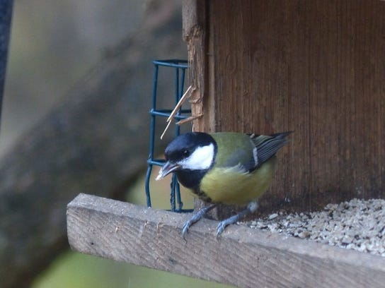 APC 103014 Yard MD BLOG-unusual birds 1.JPG