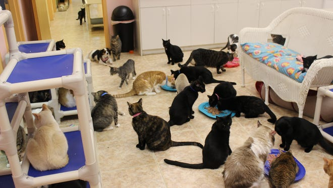 The Naples Cat Alliance started in a barn stall with 12 rescued cats. Today it shelters cats in a former veterinarian office on Davis Blvd.
