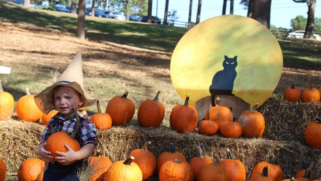 Two-year-old Lawson Campbell, picked out just the right size pumpkin from Lakeland's Great Pumpkin Patch at the annual Halloween Festival at International Harvester Park on Oct. 30.