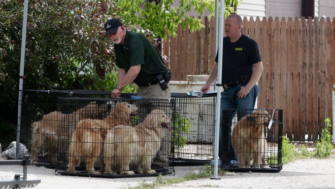 Sheboygan County Sheriff's Deputies, with assistance from the Sheboygan County Humane Society, removed 36 dogs from a Town of Wilson home on Friday.