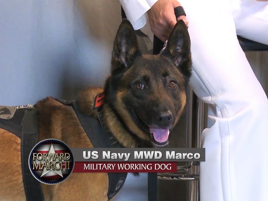 Marco, a U.S. Navy military working dog, sits on the set of the local military TV show 'FORWARD MARCH!' which concluded its second season on air and is in its third.