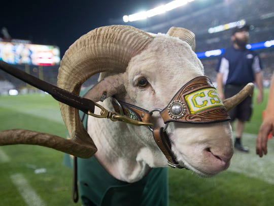 CSU mascot CAM the Ram stands on the sideline during