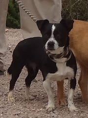 A small, mixed-breed dog is among those for which shelter officials are seeking a home prior to Sunday, when the dogs are set to be euthanized in Las Cruces.