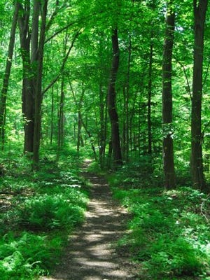 Union County's Trailside Nature & Science Center offers a nature walk and meditation program at the Watchung Reservation in Mountainside.