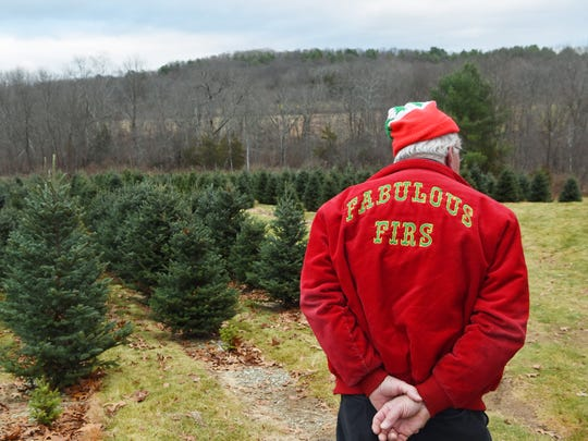 William Bryant Rawls, manager of Bilmar Nurseries and Fabulous Firs in Pleasant Valley, looks over rows of Fraser firs, the business's most popular Christmas tree.