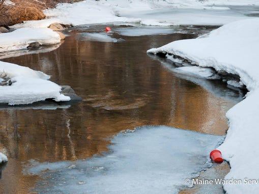 Maine department of inland fisheries wildlife for Maine fish wildlife
