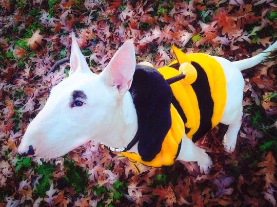 """""""Bee-cause I Love You"""" by Stephanie Rubley won the"""