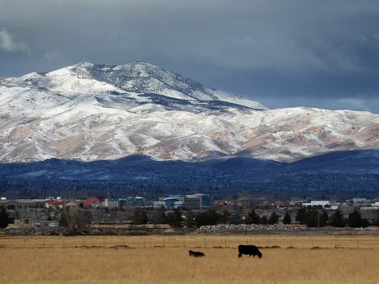Cattle graze with a view of the fresh snow on Peavine Peak in 2014.