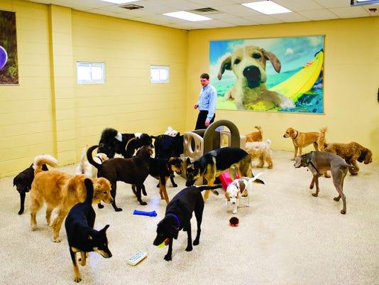 Doggie-Daycare---large-dogs.jpg