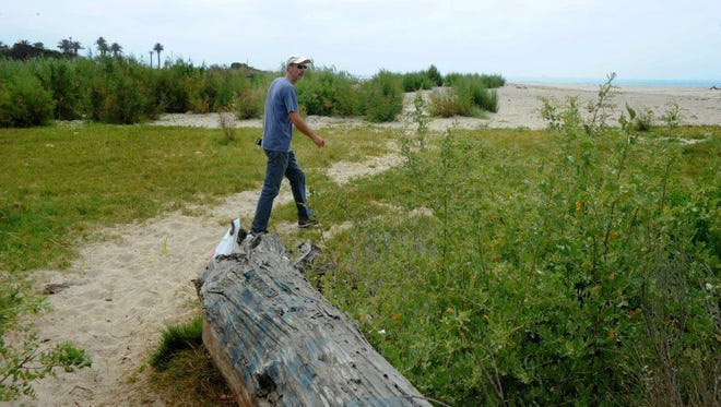 Volunteer opportunities are being offered at the Willoughby Nature Preserve in Ventura.