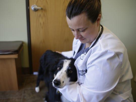 Veterinarian Becky Krull comforts Ranger during an