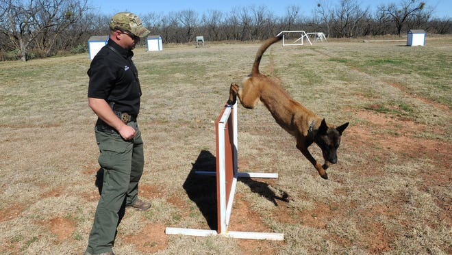 Officer Josh New with the Abilene Police Department demonstrates the training of new police dog Tica on Tuesday, Feb. 21, 2017. The police department recently lost two police dogs to illness. The Abilene Teachers Federal Credit Union donated $10,000 toward the purchase of a new K-9 officer.