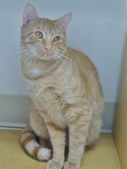 Zooey is a 1-year-old orange boy who is super affectionate.