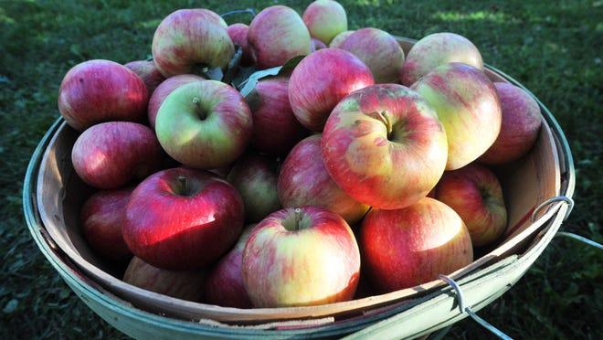 Apples at Bearfruit Apple Company in Wausau.