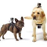 GoPro's harness for dogs