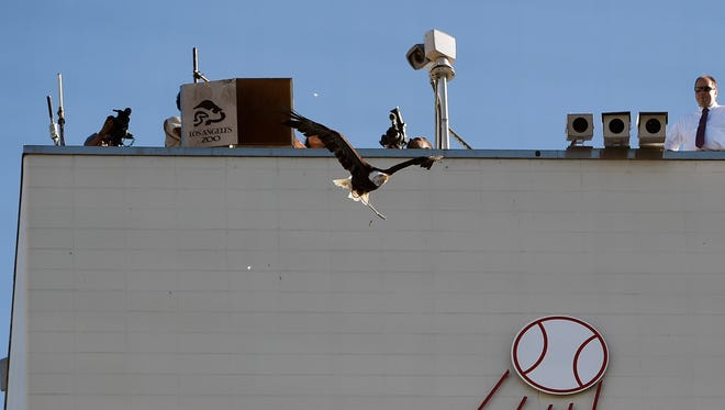 An eagle is released prior to the game between the Dodgers and Orioles at Dodger Stadium.